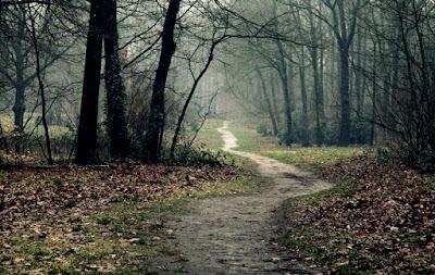 Opuszczona droga w lesie