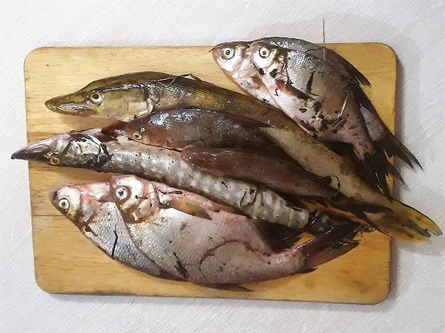 Фото для вас бесплатно / Photo is free for you, p_i_r_a_n_y_a - Ловись, рыбка, большая и маленькая
