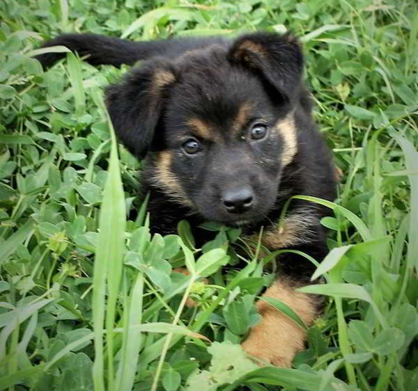 cachorro de tamaño mediano grande