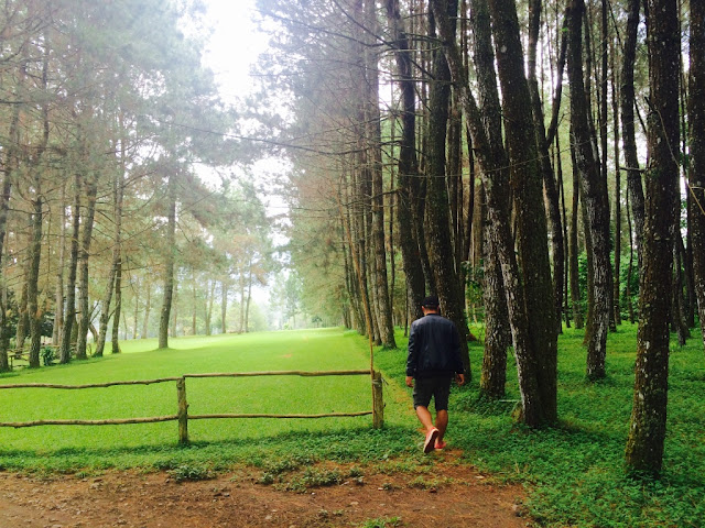 foto Pine forest Maribaya/foto - Very Barus -