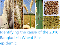 http://sciencythoughts.blogspot.co.uk/2016/10/identifying-cause-of-2016-bangladesh.html