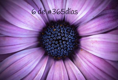 flores 6 de #365días