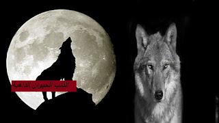 الذئب ورحلة بحث عن الحيوانات