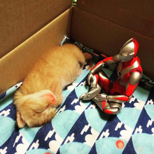 Rescata a gato abandonado y sus fotos con Ultraman, su nuevo mejor amigo, se vuelven VIRALES