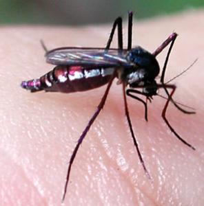 ANOPHELE,world malaria,organisation mondiale de la sante, lutte paludisme