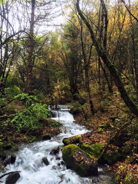 Tôi đến Cửu Trại Câu vào mùa thu, khi lá đổ sắc vàng và nhiệt độ chỉ khoảng 2-5 độ C vào sáng sớm.