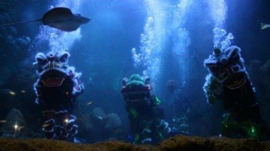 gambar sambut imlek seaworld hadirkan atraksi barongsai dalam air