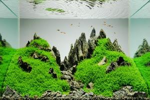 perbedaan-aquascape-dan-aquarium.jpg