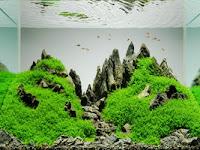Lima Perbedaan Aquarium dan Aquascape