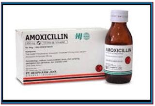 Manfaat Amoxilin Untuk Ayam Aduan Juara