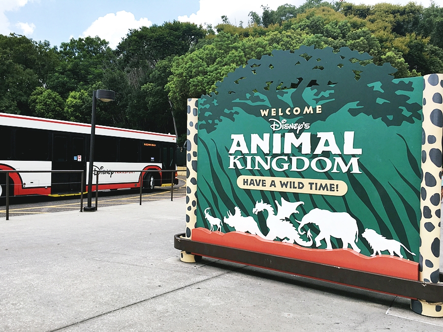 diney rlando world animal kingdom