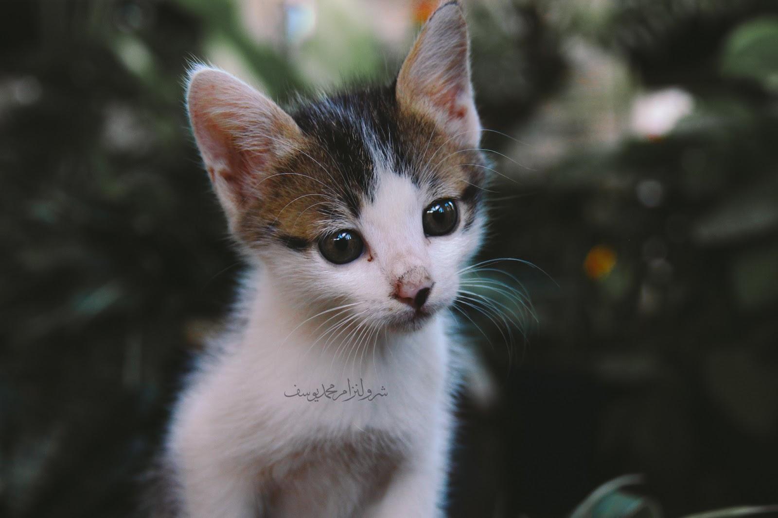 Anak Kucing Yang Comel Dan Riang - 4