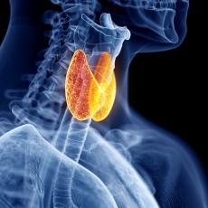 relacion gluten y tiroides