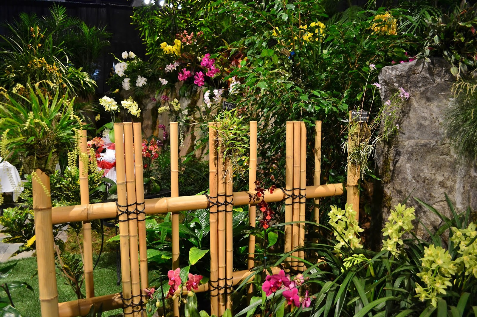 Linda Letters:: Northwest Flower and Garden Show, Part 3 - Orchids ...