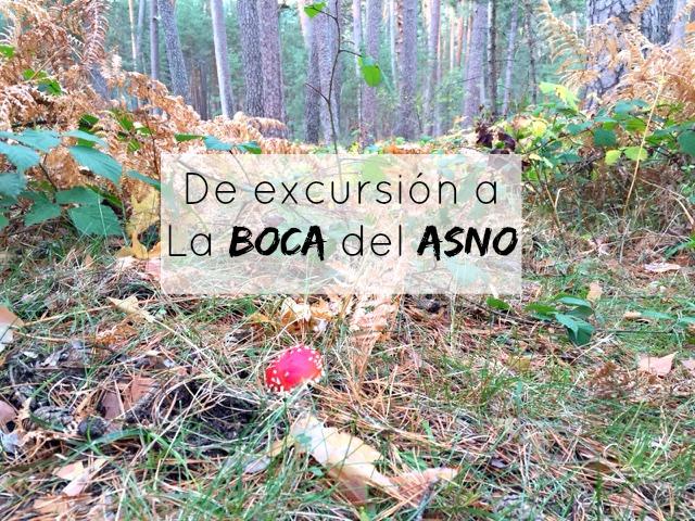 http://mediasytintas.blogspot.com/2015/11/la-boca-del-asno.html