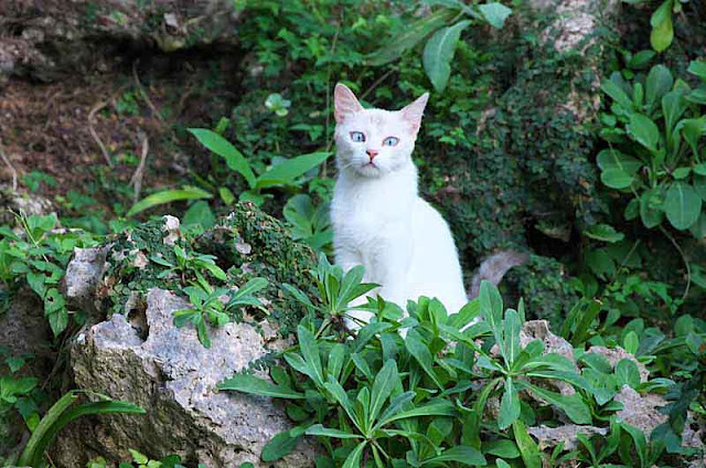 white cat on rocks in woods
