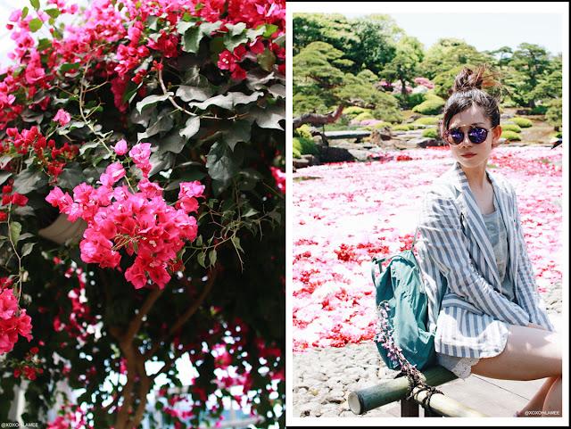 由志園 池泉牡丹 島根県 花 日本庭園 ブーゲンビリア