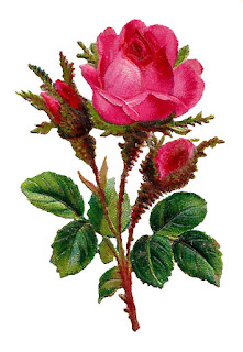 rose flower art botanical image digital illustration