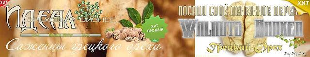 Саджанці грецкого горіха Ідеал, 0985674877, 0957351986, купити в Україні, Walnuts Broker