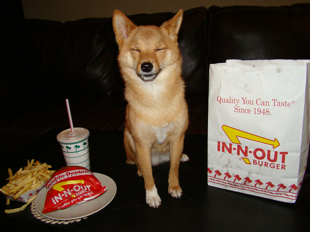 dog sitting next to in n' out burger