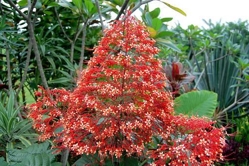 Image result for bunga pagoda