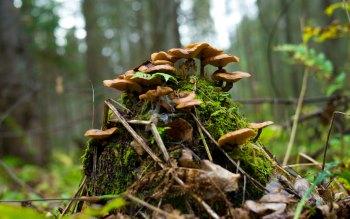 Wallpaper: Nature: Forest Mushrooms