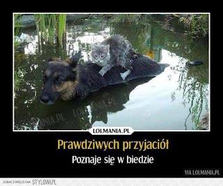 Gawęda Jak Nasze Psy I Koty Prawdziwych Przyjaciół Poznaje