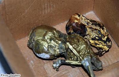 Seorang Individu Ditahan Ketika Cuba Seludup Fetus Bersalut Emas