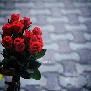 صور ورود حب جميلة جدا ومعبرة زهور متنوعة