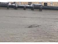 Mahluk Misterius 'Loch Ness' Kembali Perlihatkan Wujudnya