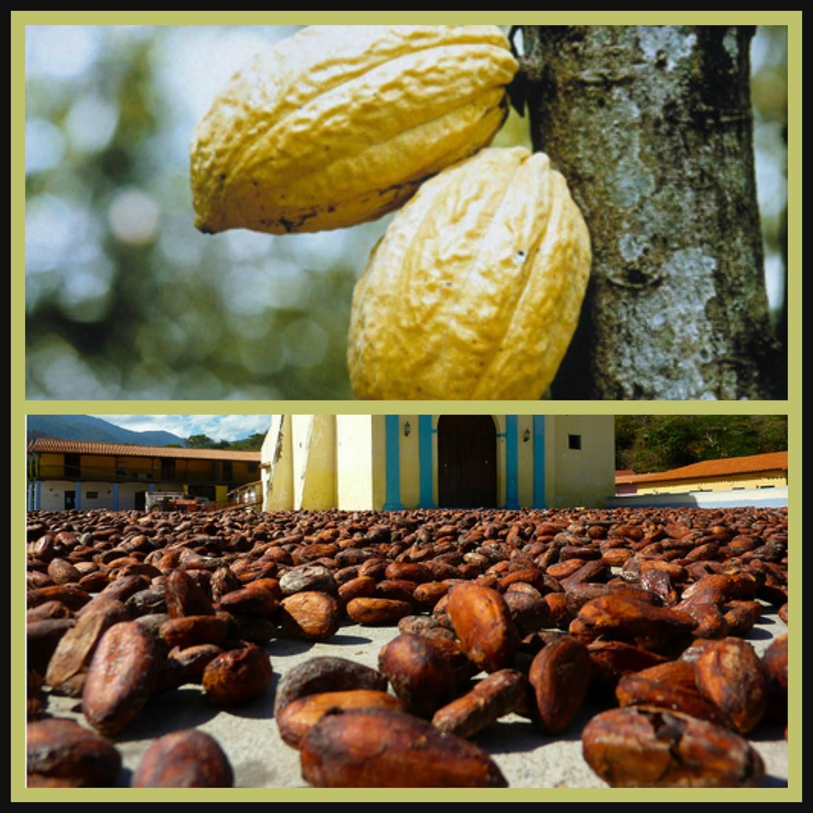 Cultivo (Cacao, Arroz, Caña de Azúcar, Maíz, Algodón)