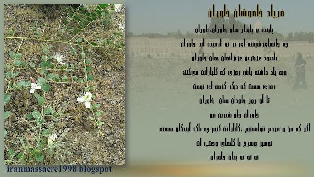 گلهای وحشی خاوران