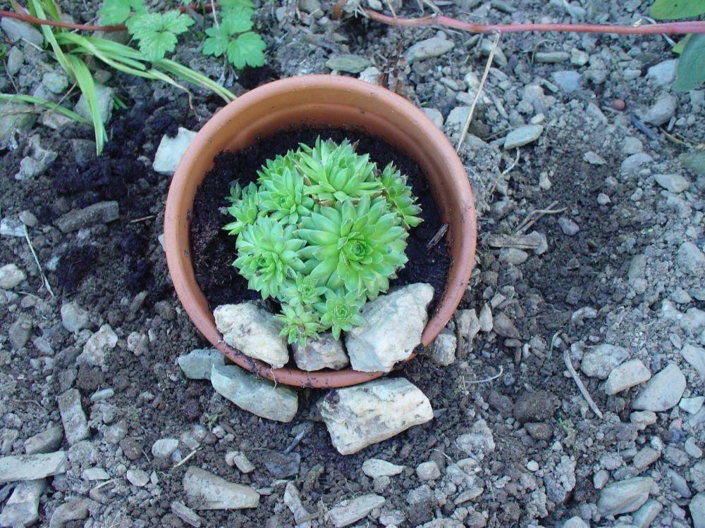 gartenbasteleien, Garten und erstellen