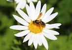 Pengertian dan Contoh Perkembangbiakan Tumbuhan secara Generatif dan Vegetatif