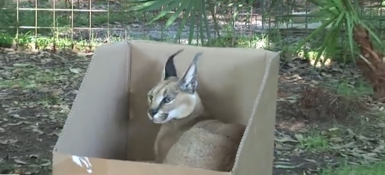 Gatinhos amam caixas