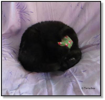 Katzen lieben Baldrian
