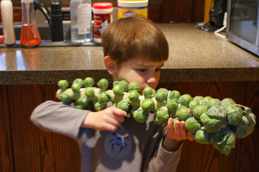 The Brussels Sprouts Bazooka!