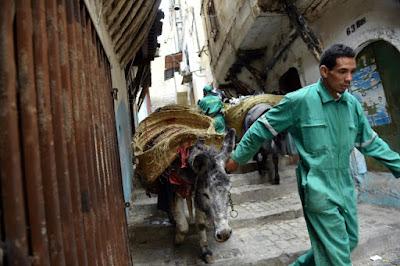 Environnement A Alger, l'âne,