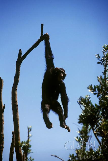 Кения осталась без электричества из-за обезьяны
