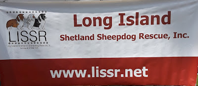 The Long Island Shetland Sheepdog Rescue group was at the Scottish Festival on Long Island NY.