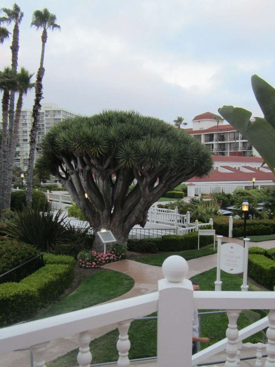Ciao! Newport Beach: The Gardens Of Hotel Del Coronado