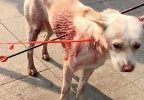 Dog impaled with three-foot Arrow rescued