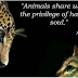 ΠΥΘΑΓΟΡΑΣ: Τι μοιραζόμαστε με τα ζώα...