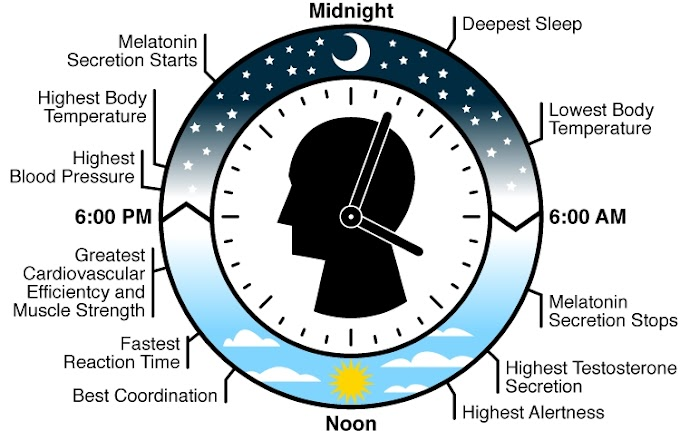 Let's Know How Your Body Clock Actually Works - Must Read