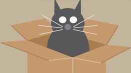 لماذا تحب القطط  الصناديق
