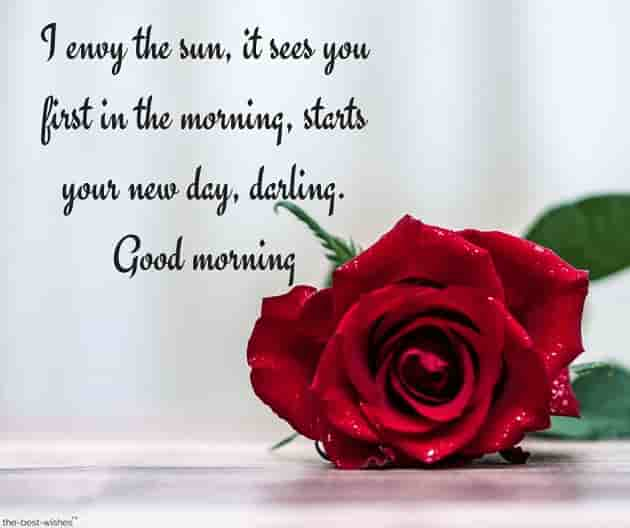 good morning text messages for your crush with red rose