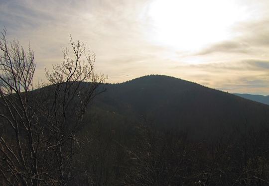 Ciecień z Księżej Góry.