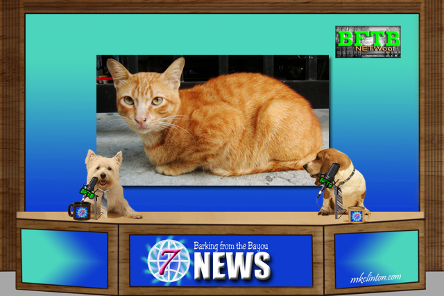 BFTB NETWoof News with dog anchors