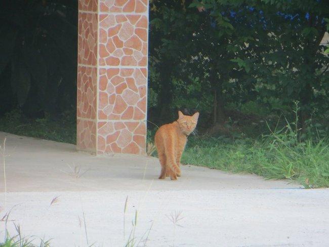 Смотрит рыжий кот