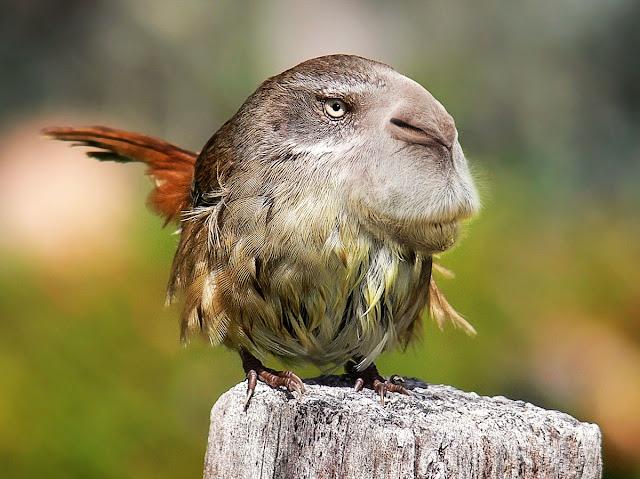 Rodent Bird